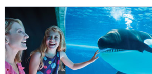 20% OFF Discount SeaWorld Orlando Tickets + 2nd day FREE